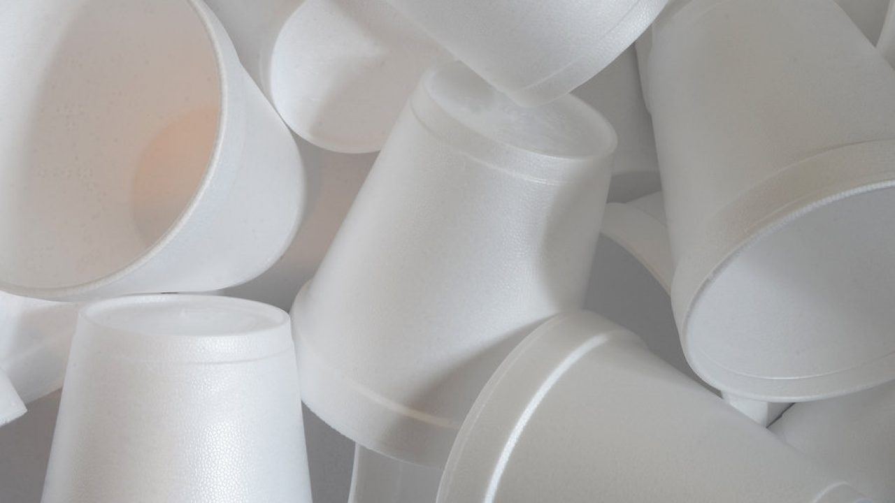 my dog ate a styrofoam cup